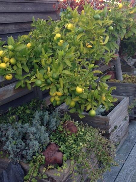 Sausalito Succulents 1