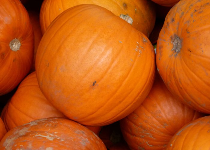 Pumpkins - neither native food nor tradition to Britain