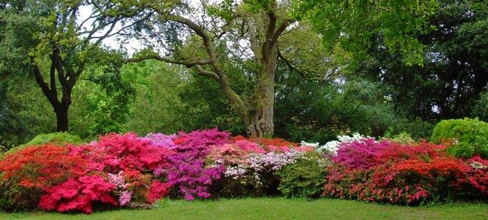 Exbury, gardens, rhododendrons, azaleas