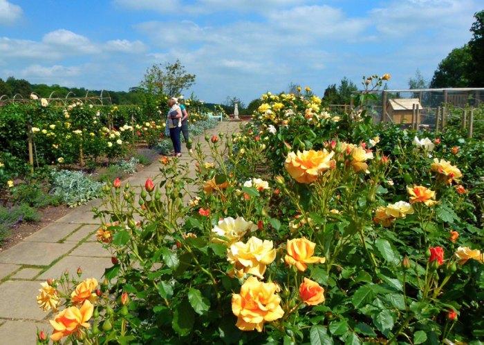 Chartwell, golden rose avenue
