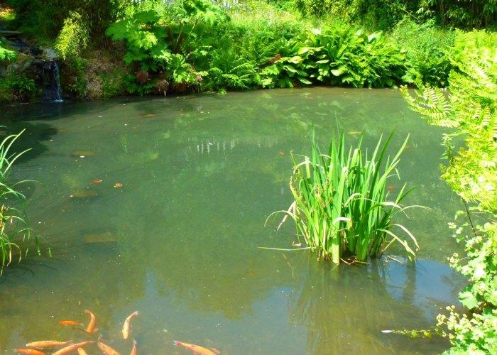 Pond, fish, Chartwell