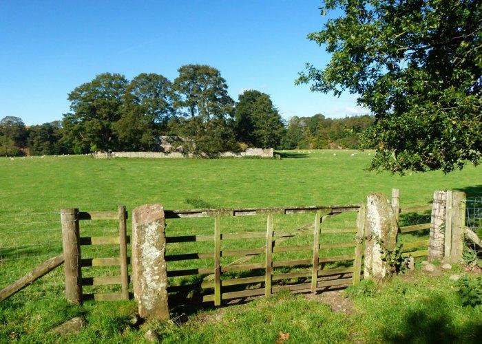 Ninekirks in a field