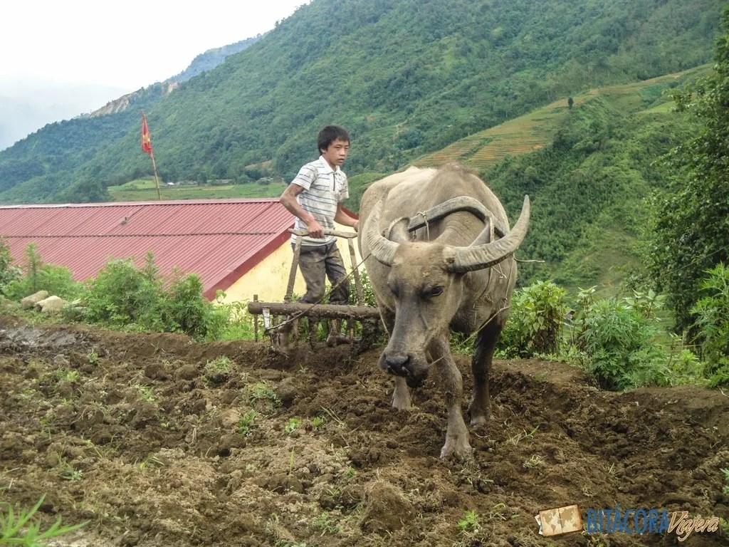 trekking-sapa-vietnam-13
