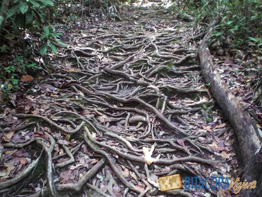 Parque Nacional Bako - Borneo Malasia (1)