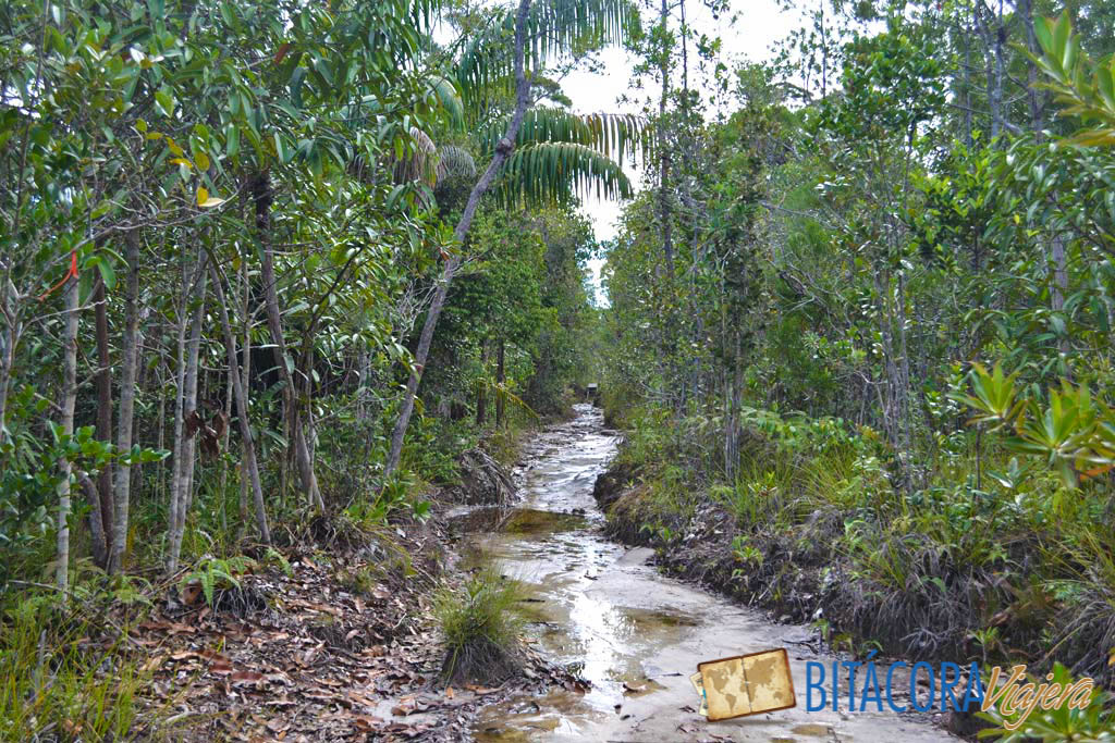 Parque Nacional Bako - Borneo Malasia (5)