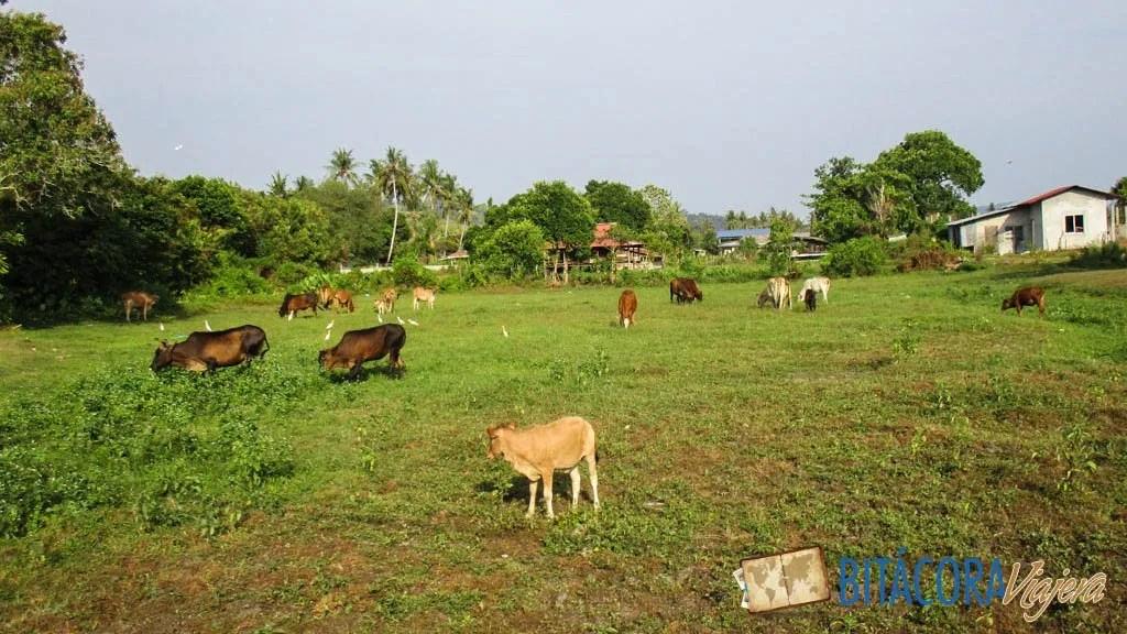 campo en langkawi