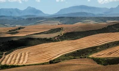 Cardano Land Ownership Africa