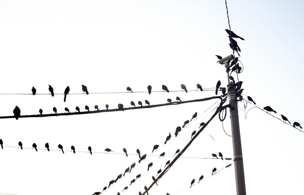 fm5_Sarah_Laval_Birds