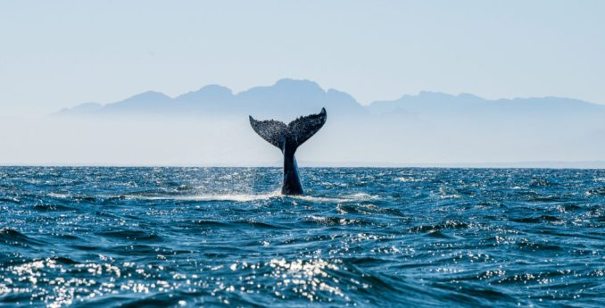 shutterstock_548729362-980x498 Chainalysis Finds That Bitcoin Whales Are Not the Sole Source of Market Volatility