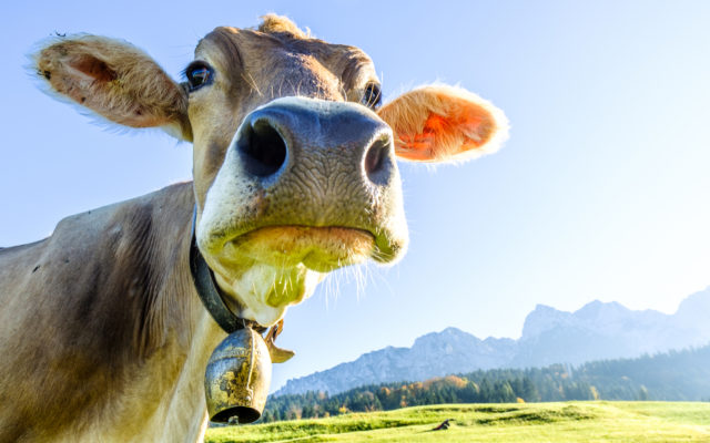 Dash Investors' Missing Funds Returned, Moocowmoo Resurfaces