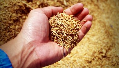Oxfam Launches Blockchain-based Rice Supply Chain BlocRice