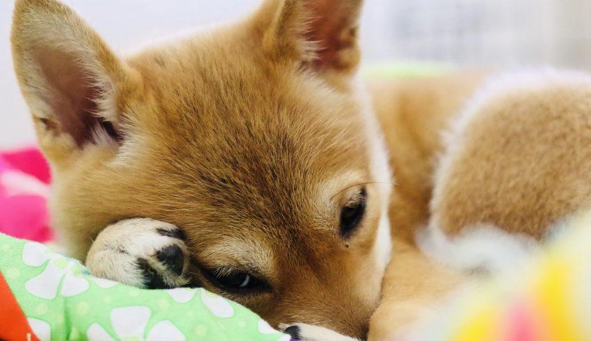 Dogecoin Enjoys Spotlight After Binance Listing