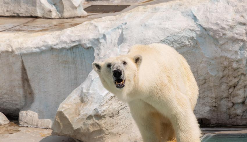 Bitcoin Slips Momentarily Below $10,000 as Bears Dominate