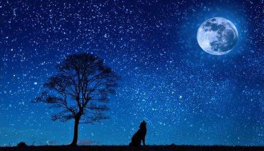 dogecoin moon