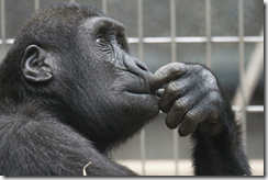 Monkey thinking about Bitcoin