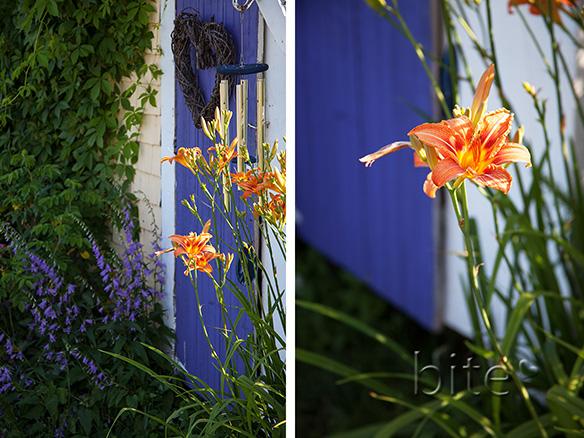 Homestead Lilies