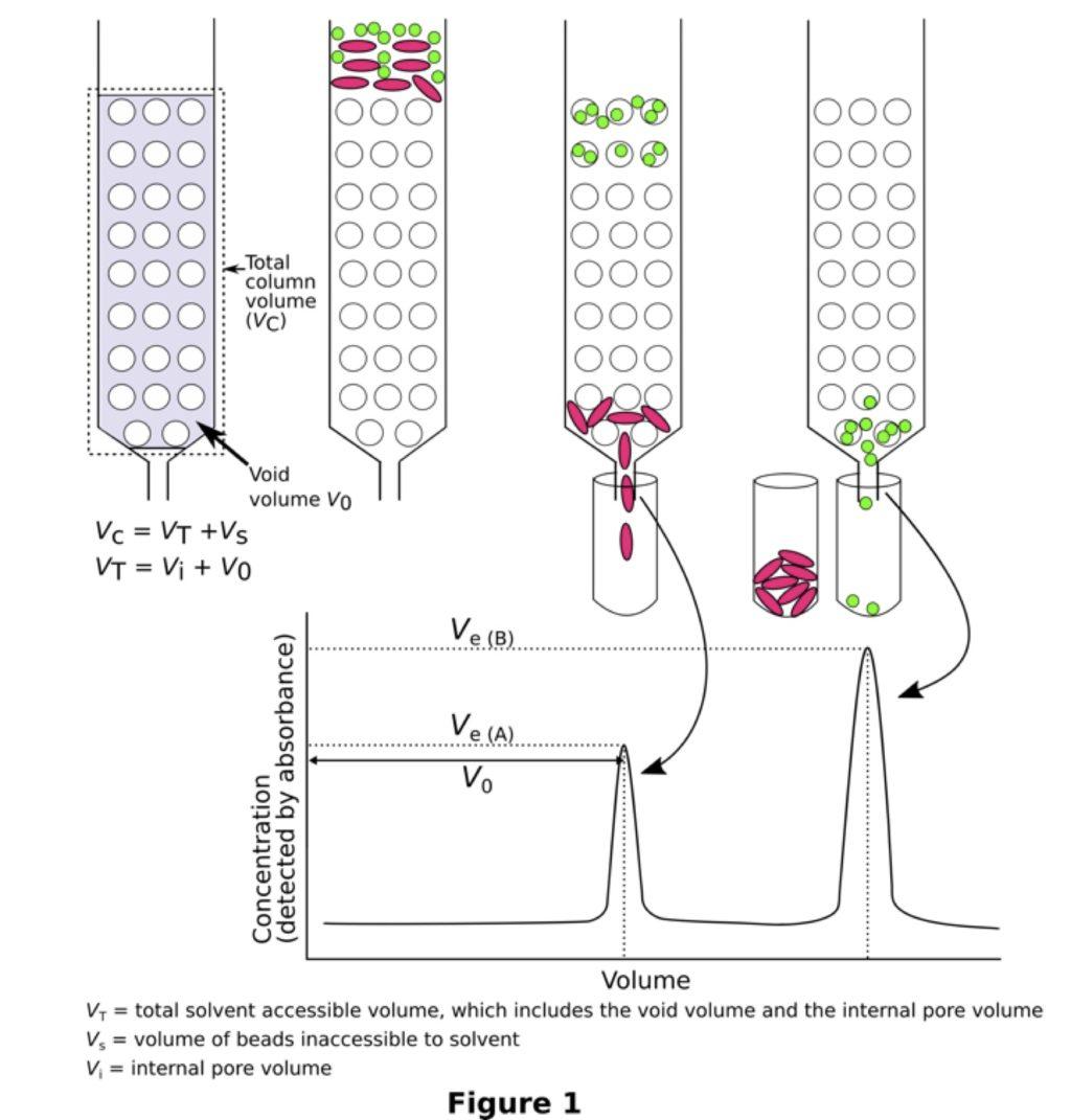 Using A Gel Filtration Chromatogram To Estimate Molecular