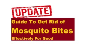 updated guide to kill mosquitos for good
