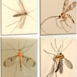 shapes of gnat types