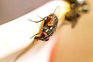 fly swirl swarm