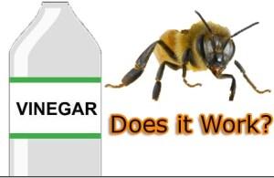 vinegar does not work , bicarb paste does work neutralize bee stings venom