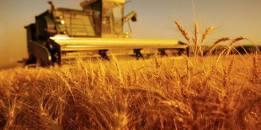 hasat zamanı 2