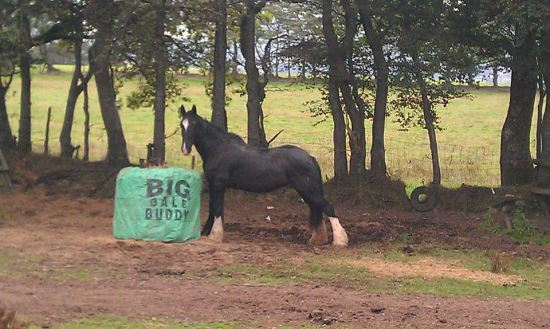 Big Bale Buddy available from Bitless Equestrian