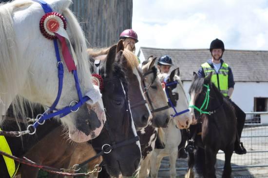 bitless natural equestrian centre Lampeter