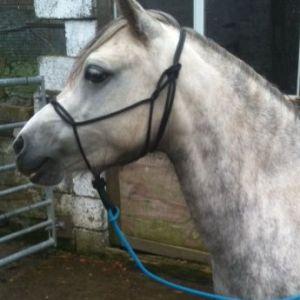knotless spliced halter hand-made UK bitless equestrian