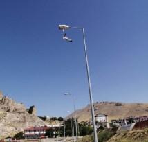 Bitlis'te yere atılan maske martının ayağına takılmasıyla konduğu direkte mahsur kaldı