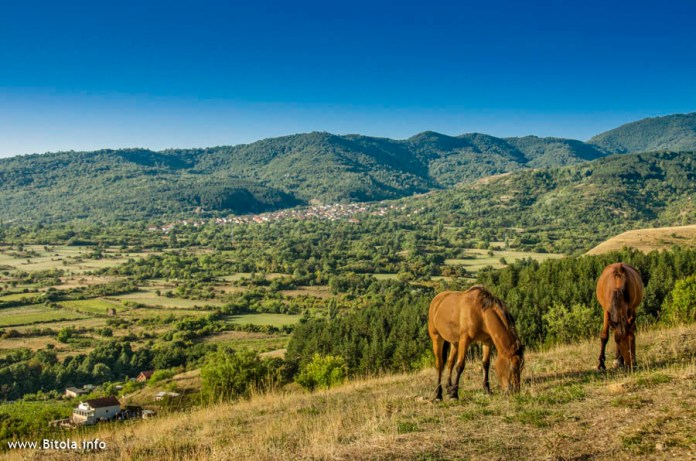 horses near city Bitola in Macedonia