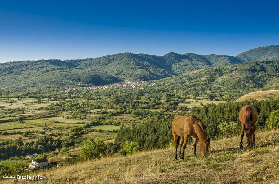 horses near city Bitola in Macedonia