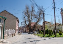 Cinar tree Bitola, Macedonia