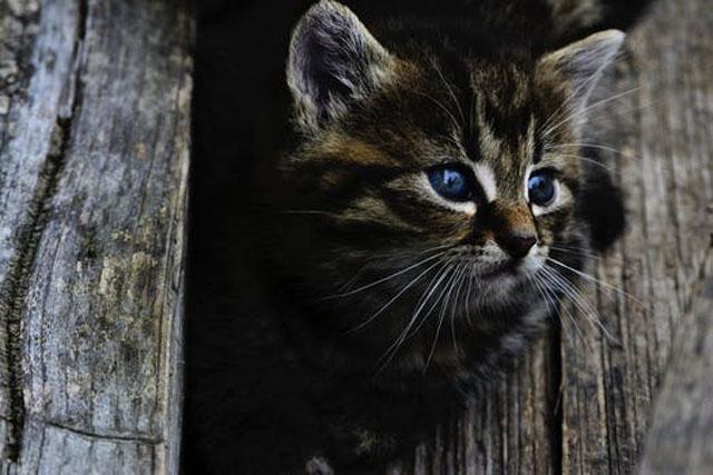 狭い所にいる猫
