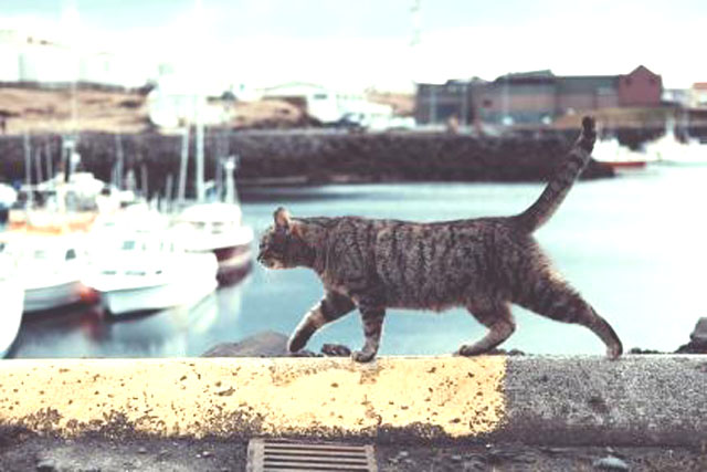 一人で行動する猫