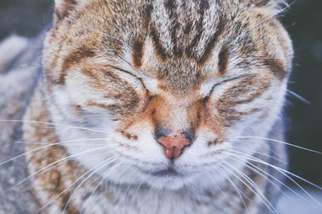 いきんでいるような猫