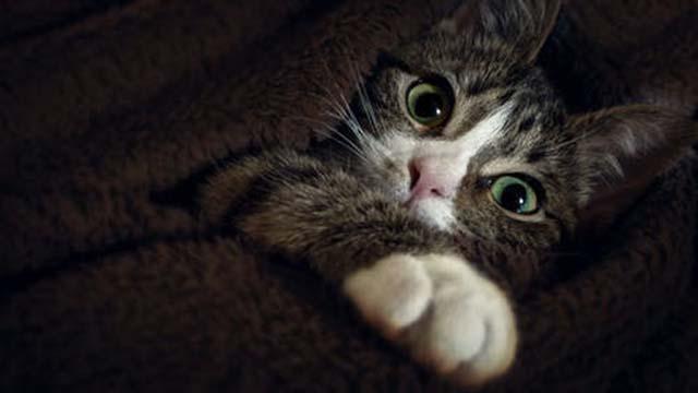 のぞいている猫2