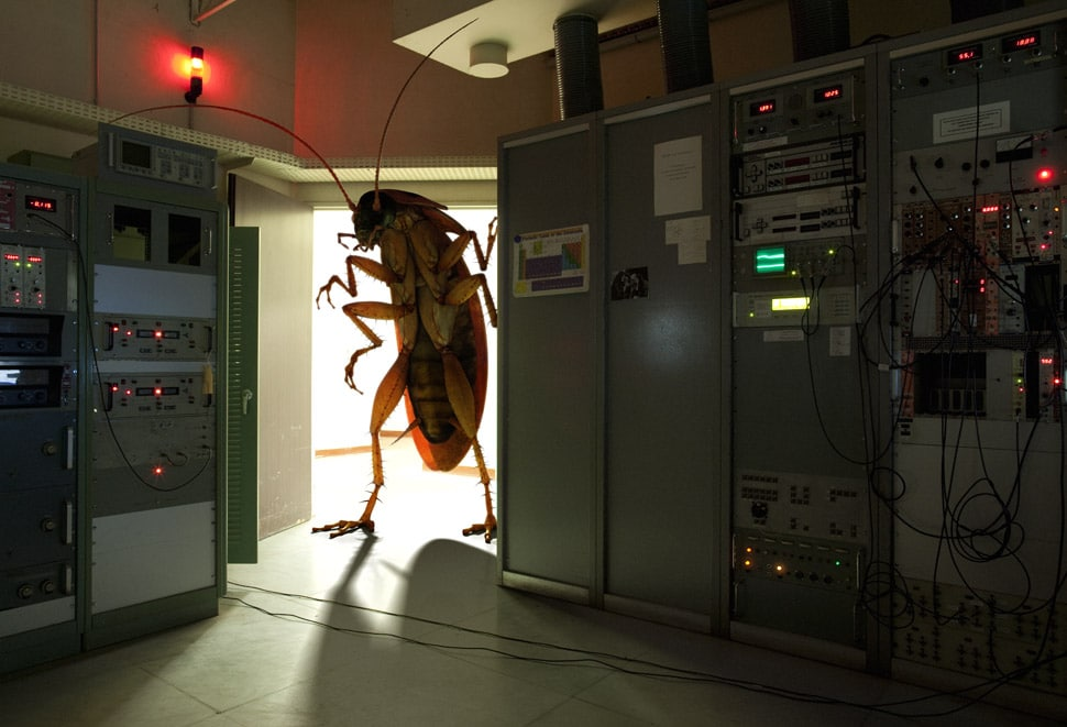 You Don T Want This Bug In Your System Bit Rebels