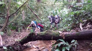 trekkers climbing over fallen trees in the jungle