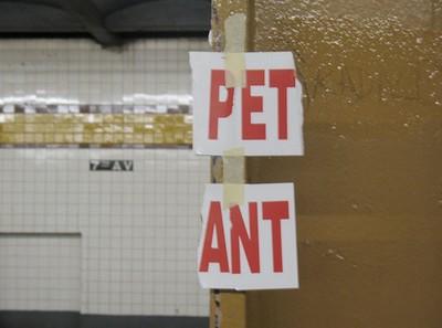 Pet_ant