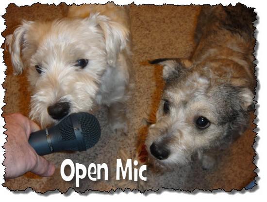 Dogs open mic