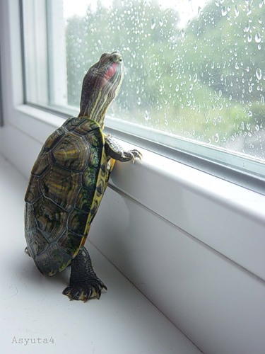 Caption turtle