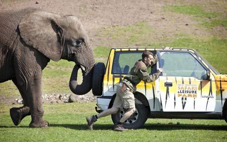 Elephant pushes car