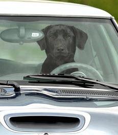 Dog car honk