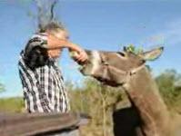 Donkey brewski