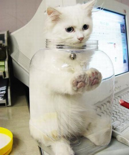 Jar kitty