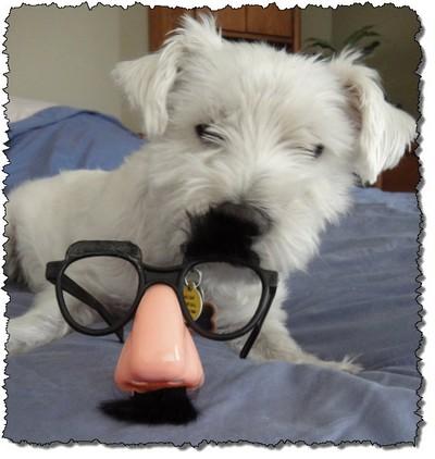 MissC glasses gus