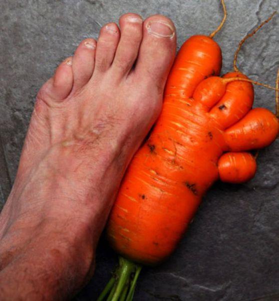 1 ft carrot