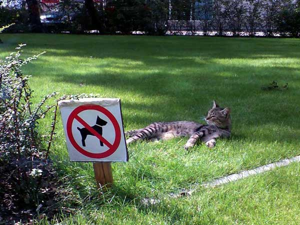 Cat safety zone