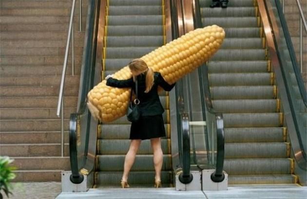Corn cob giant